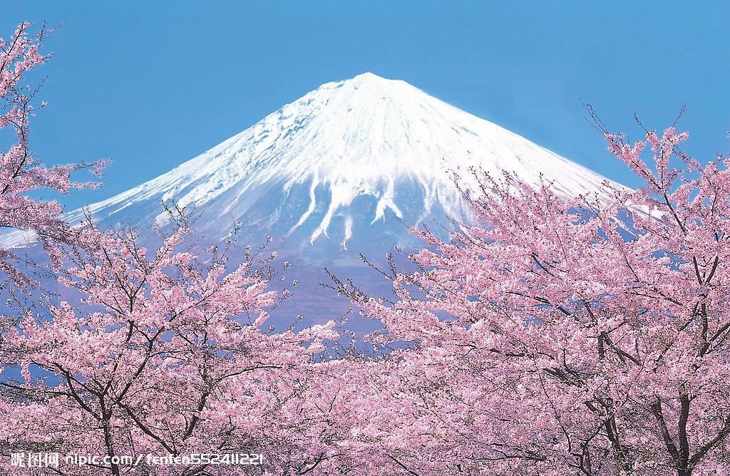 求一张唯美的富士樱花图片也可以是有位少女在祈祷是