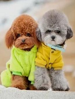 宠物小型犬有哪些品种