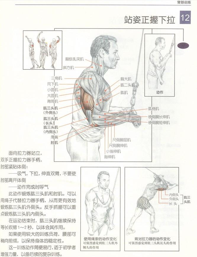 这个锻炼肱三头肌的下拉器叫什么名字?_百度知道