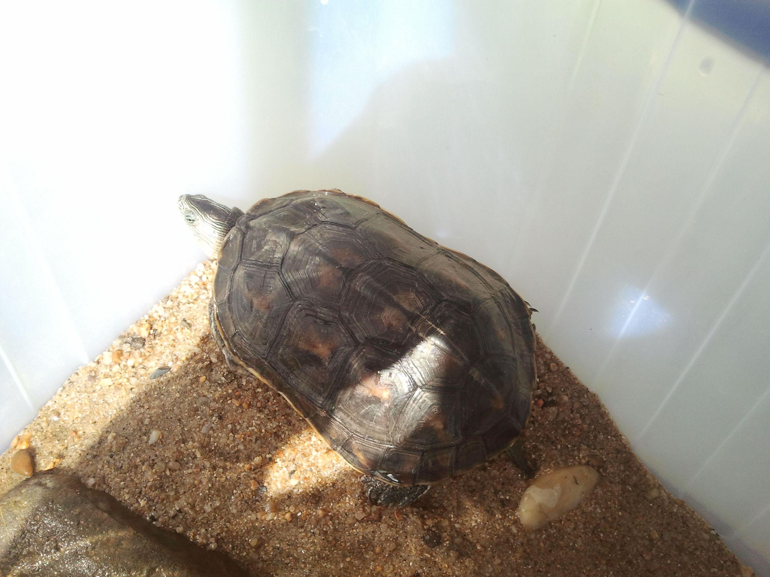 求鉴定乌龟的品种,谢谢