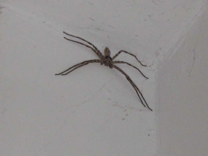 家里的厨房的墙上有一只好大的蜘蛛,有点吓人,有 ...