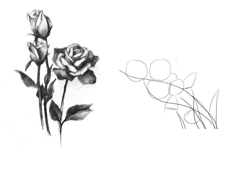 玫瑰花创意素描图片