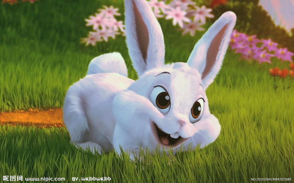 兔_兔子壁纸1680x1050图片编号6163194801