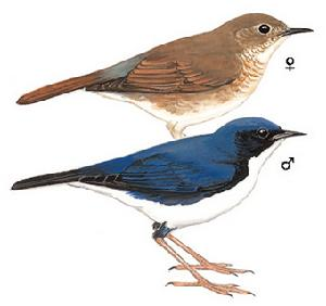 北方农村常见的鸟图片