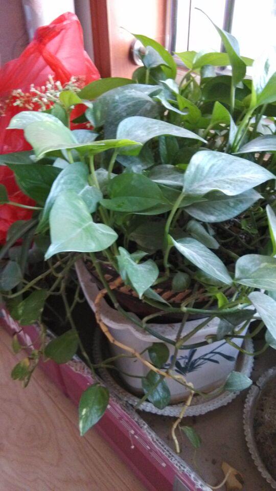 家中花草都叫什么名字,适合有宝宝的家里养殖吗?