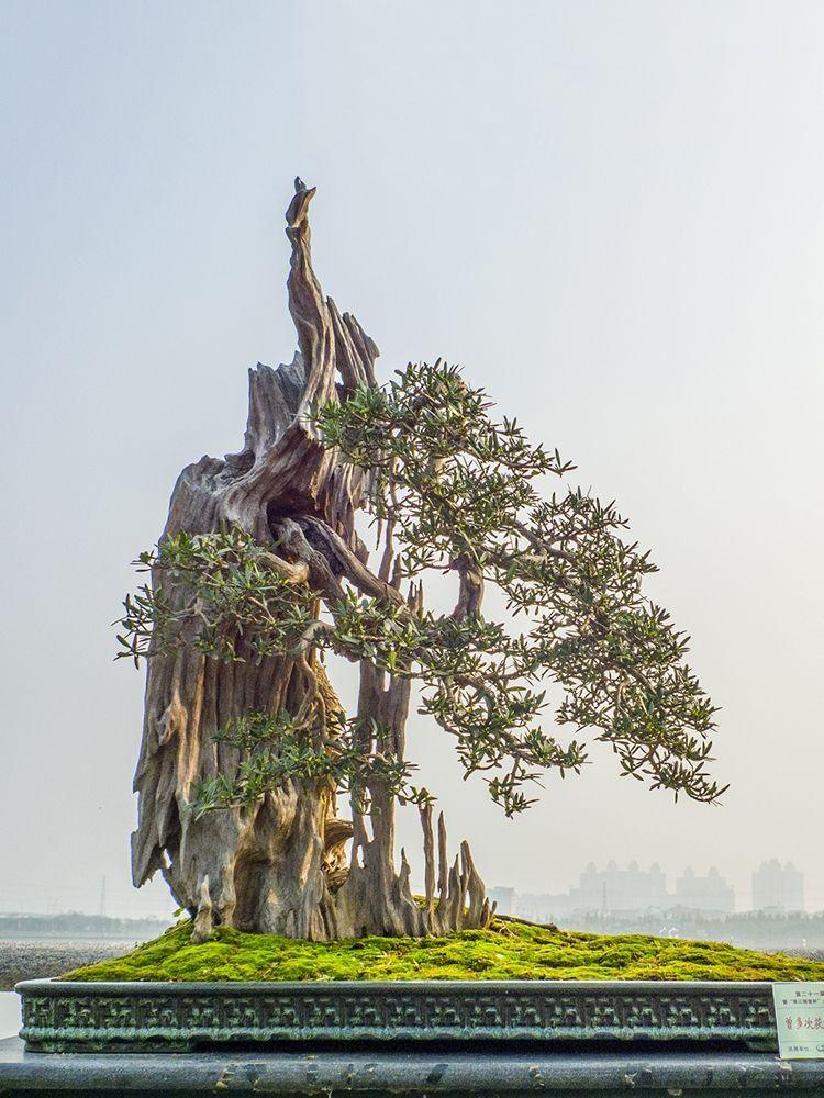 广州岭南盆景园