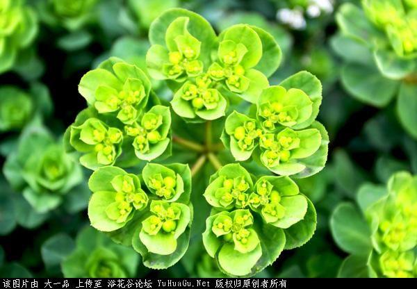 花序的种类