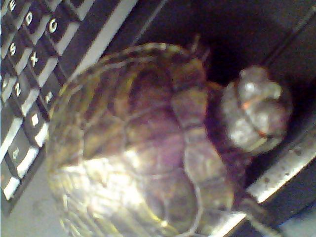 同问乌龟眼睛肿了怎么办 还没得白眼病 红霉素用过,效果不明显 可以