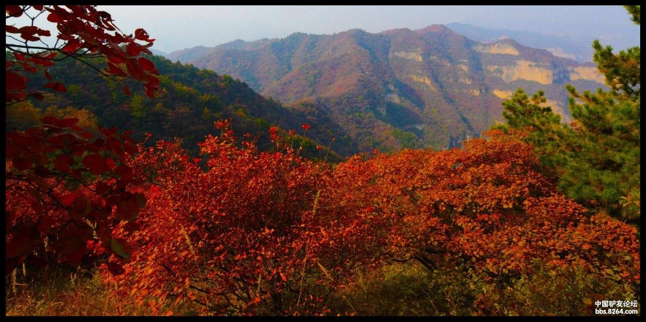 仙台山红叶什么时候红