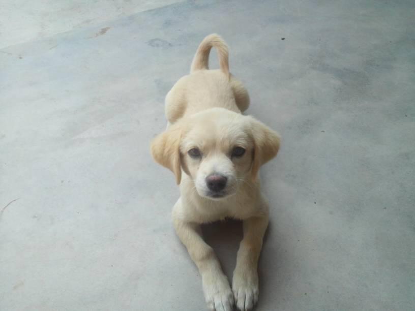 谁能告诉我这是什么狗?拉布拉多幼犬?图片