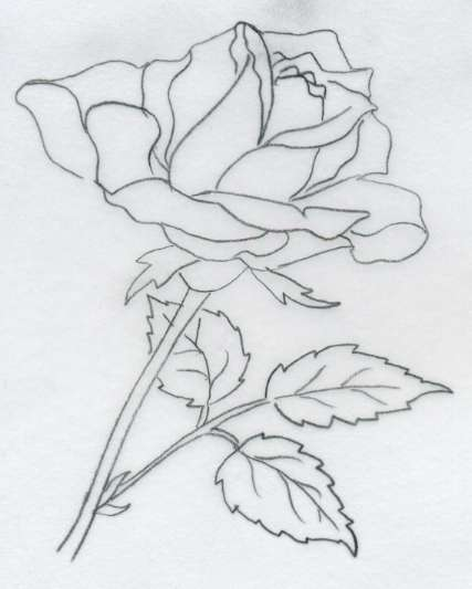 画玫瑰花的简笔画