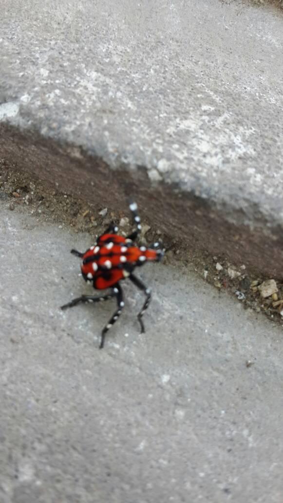 是什么昆虫,是捉蛐蛐时捉到的