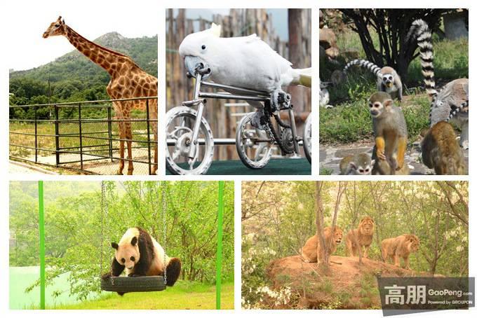 青岛哪个动物园好玩
