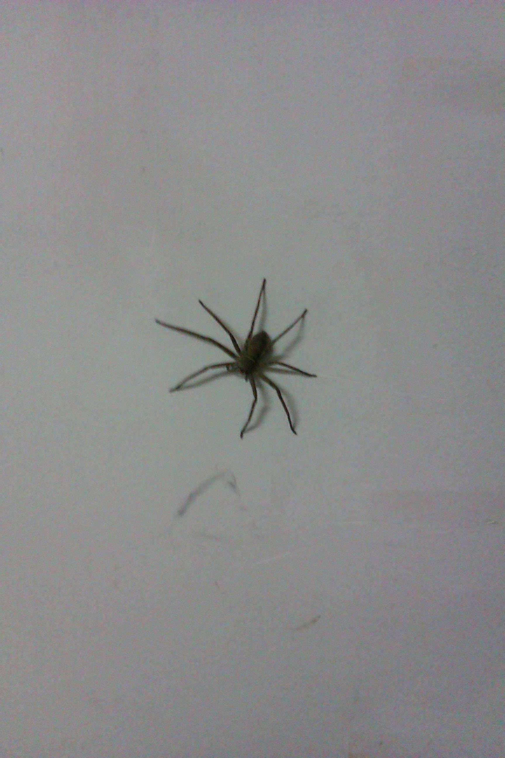 大蜘蛛图片_大蜘蛛在家里的图片_家里有个巴掌大的 ...
