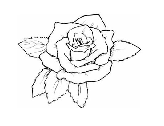 角度的玫瑰花的素描,需要简单 -简单素描图画 小头爸爸图画素描 圣图片