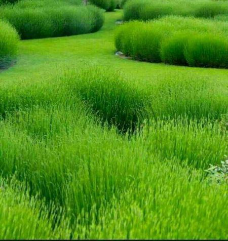 ... 绿色聊天底片图_绿色水滴聊天背景图片_绿色聊天