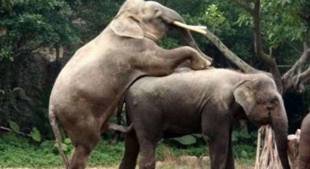 怎样��`'�-�ZَY��&_大象怎样交配