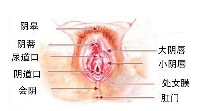 尿道口流出白色液体女人尿道口疼痛
