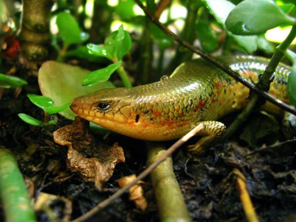 蛇真身的样子-的颜色,身体的形状像蛇一样并且皮肤是光滑的.但长着四只脚,不