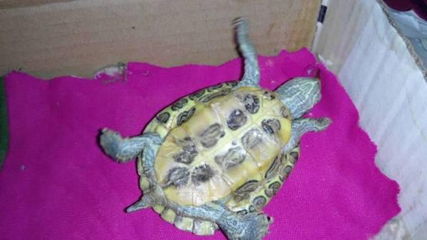 我家的乌龟壳,变成这个样子子怎么回事