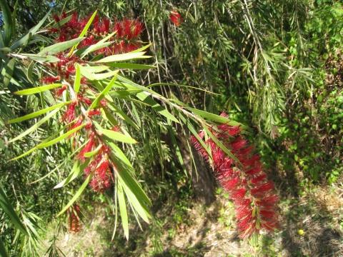 植物名称大全图片