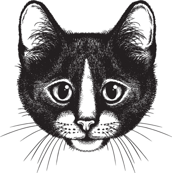 Black Background With Small Cat Head
