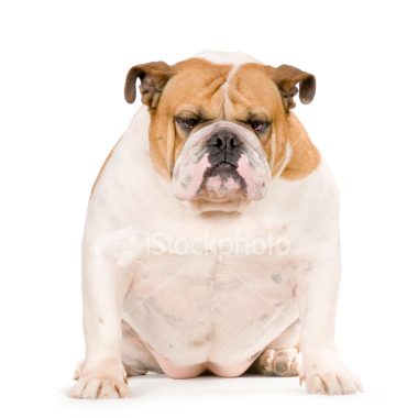 Cute Girl Dog Names For Bulldogs