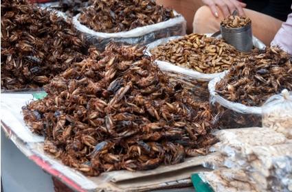吃杨梅等于吃虫子,水果里的虫子可以吃吗