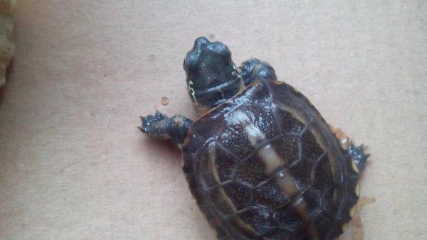 的,一块钱的水乌龟能用吗