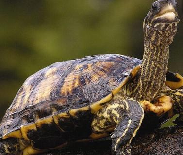 乌龟冬眠在什么时候