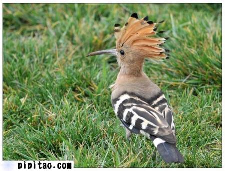 啄木鸟百度云压缩链接