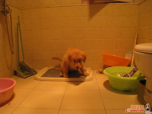 公共厕所母狗微博