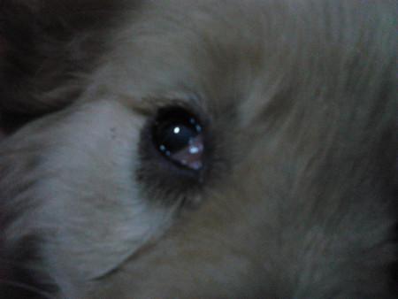 小猫眼睛发炎了 红肿流眼泪 用什么眼药水好